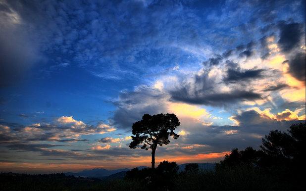 небо, Дерево, облака.