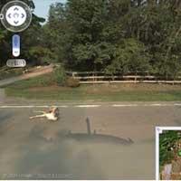 Google Maps aracı geyiğe çarptı!
