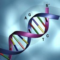 Kendi DNA haritanızı satın alın!