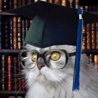 Online eğitimde kedi bile lise mezunu olabiliyor