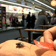 Almanya'da tanıtımı sinek ile yaptılar!