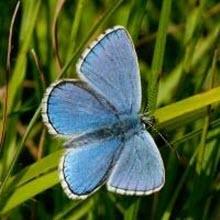 Kelebeğin mucize evrimi