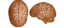 Beyne takılan tedavi ediyor!