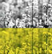 Doğa fotoğraflarına siyah-beyaz görünüm