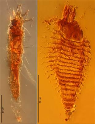230 milyon yıllık akar fosili