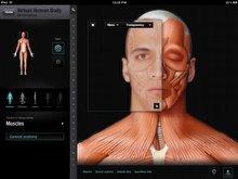 Eğlenceli bir anatomi ders: The Human Bodyok