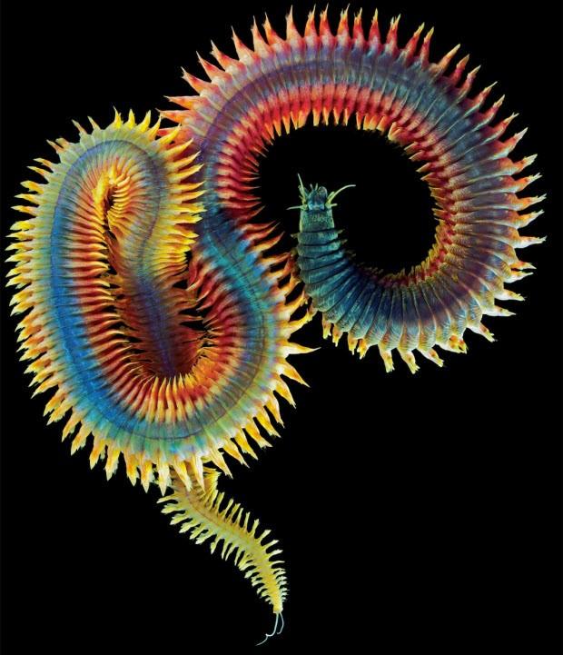 Bu canlılarla aynı gezegende yaşıyoruz!