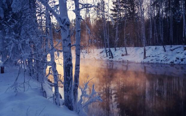 Картинки солнечный лес