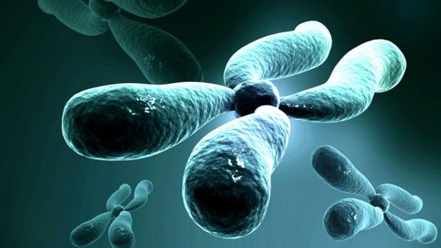 Yapay bir kromozom üretildi