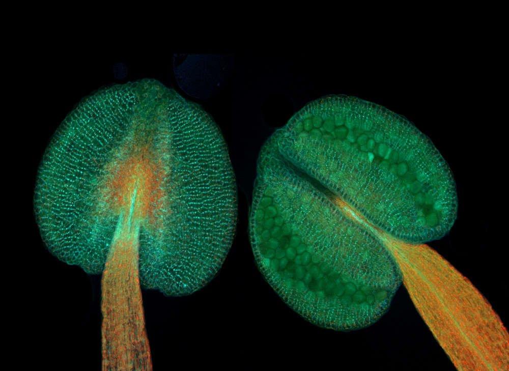 Bilim Adamlarından Bitkilerin Beyni Araştırması
