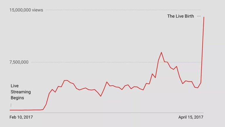 Zürafa April'in Hayranları, YouTube'ta Rekor Kırdı