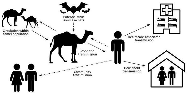 Hayvanlarda Corona Olur mu? Sahibinden Coronavirüs Kapan Kedi Onaylandı