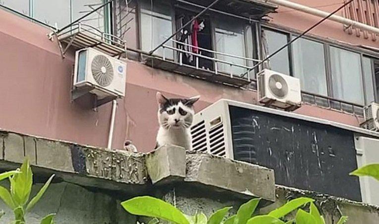 Yüz mimikleri nedeni ile üzgün görünen kedi! Siz de bakınca üzülebilirsiniz