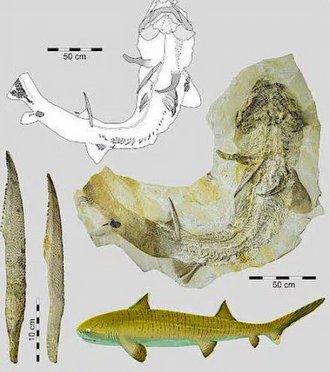 Tarihte Bir İlk: Tarih Öncesine Ait Dev Köpek Balığı Fosili Şaşırttı