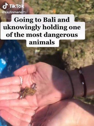 Sevimli ama Ölümcül: Mavi Halkalı Ahtapot, TikTok Videosu ile Yine Gündemde